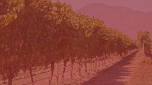 Organic Wines Living SOILS